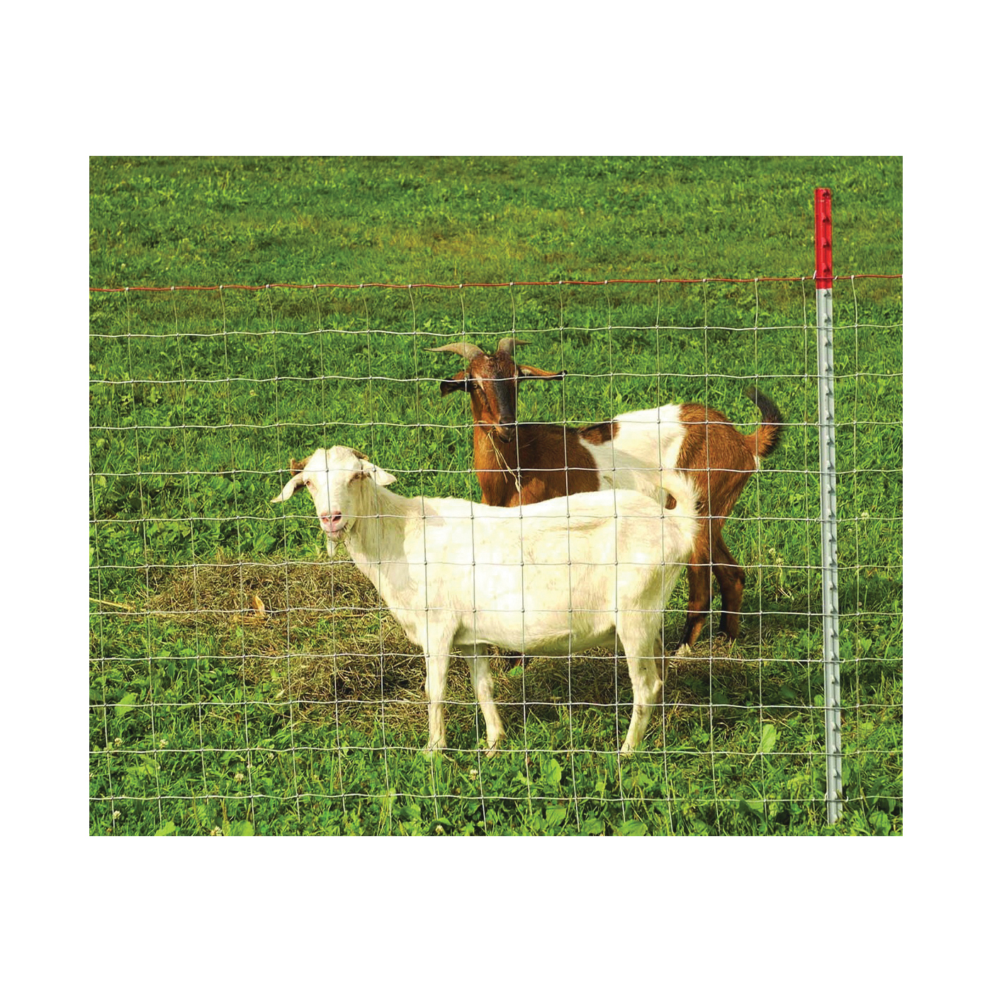 Picture of Red Brand Square Deal 70315 Sheep and Goat Fence, 330 ft L, 48 in H, 4 x 4 in Mesh, 12-1/2 Gauge, Galvanized